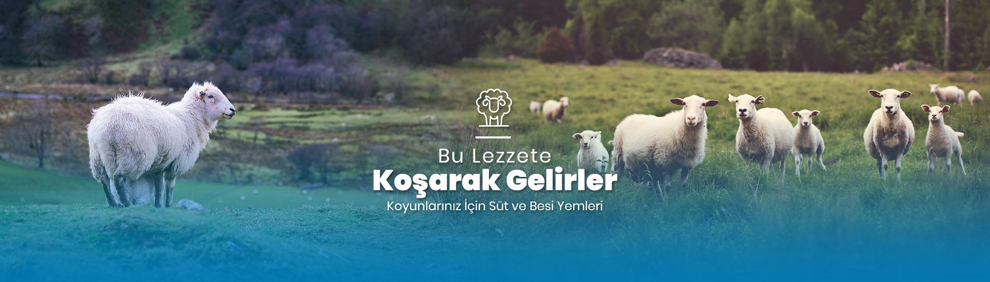 http://cayliyem.com.tr/Slayt - 1